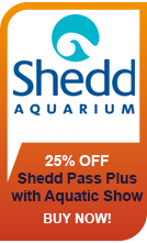 Shedd Aquarum with Live Aquatic Show