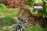 Wildlife heritage foundation tickets