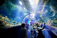 bristol aquarium tunnel