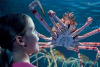 Gardaland SEA LIFE Aquarium - new for 2015