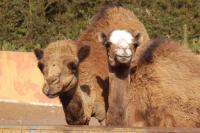 Camel Park Tenerife Riders