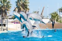 Aquopolis Salou Dolphins
