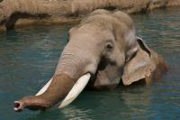 Elephant Odyssey