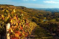 Vignes Paysages Beaujolais