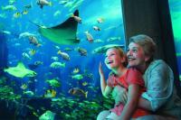 Lost Chambers Atlantis Aquarium