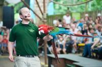 london zoo parrot