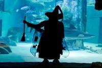 Halloween at Sea Life Aquarium London