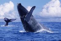 Tijuana Whale Watching Jump