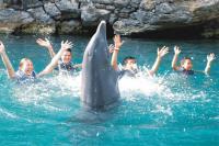 Riviera Maya Dolphins Group