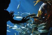 SEA LIFE Königswinter Faszination Unterwasserwelt