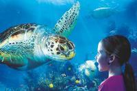 SEA LIFE Timmendorfer Strand Mädchen mit Riesenschildkröte