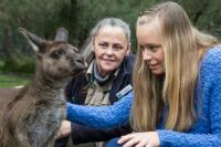 Meet a friendly Kangaroo at Healesville Sanctuary