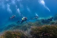 Scuba Dive Murcia Swim