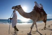 Camel Riding in the Coast