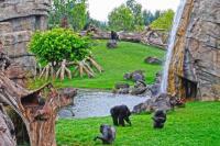 Bioparc Valencia - Chimpanzees