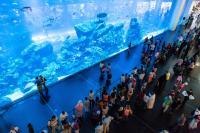 Dubai Aquarium Main Front Tank