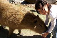 Girl Feeding an Animal