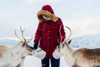 Feeding Reindeers - Snowmobile Safari