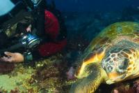 Scuba Diving Turtle