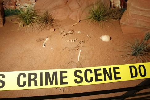 Click to view details and reviews for Csi The Experience Las Vegas.