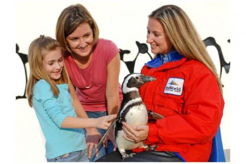 Click to view details and reviews for Seaworld Orlando Vip Tour.