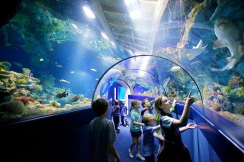 bristol aquarium tunnel