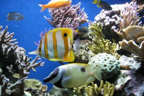 Blue reef newquay offers discounts cheap tickets buy for Discount aquarium fish and reef