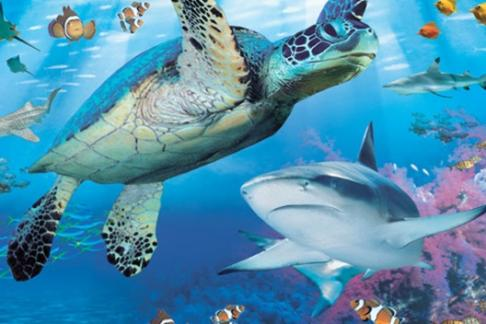 Click to view details and reviews for Sea Life Brighton Aquarium Priority Entry.