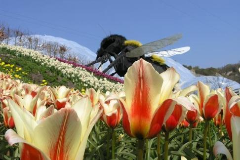 Giant bee sculpture in the Gardens at the Eden Project