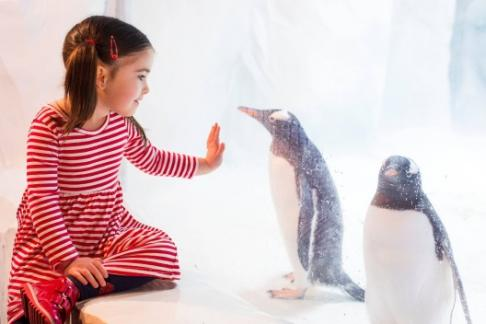 girl and ice penguin Birmingham