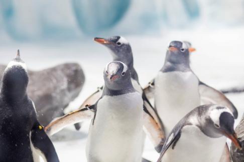 Penguins merry fish-mas Birmingham