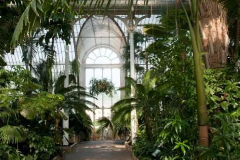 Kew Gardens palm house indoor