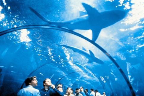 Barcelona Aquarium Offers Discounts Cheap Tickets Buy