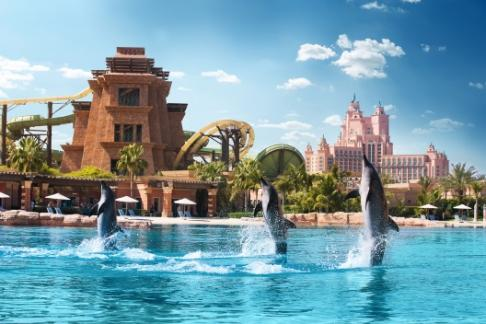 Image of Atlantis Dolphin Adventure + Sea Lion Discovery