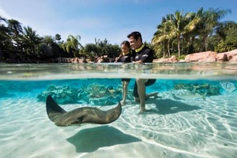 Click to view details and reviews for Discovery Cove Package.