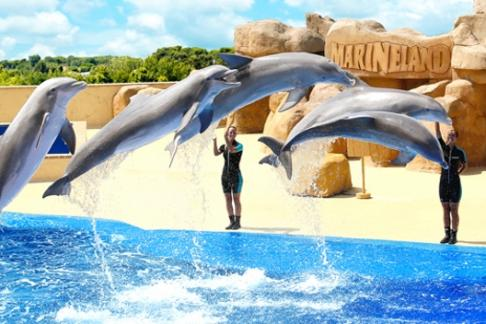 Image of Marineland Catalunya - 1 Day Ticket + FREE Transport