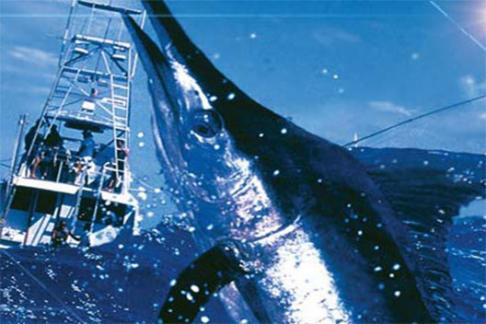 Image of Deep Sea Fishing - Cancun