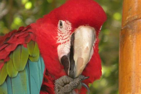 Mundo Mar Macaw