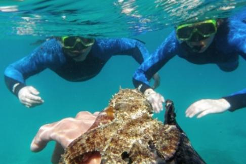 Click to view details and reviews for Snorkel Boat Fuerteventura.