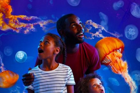 Click to view details and reviews for Sea Life London Aquarium Uber Journey.