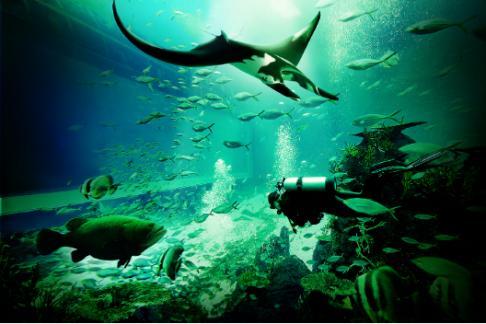 365Tickets IE S.E.A. Aquarium Singapore