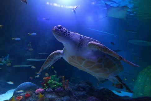 Sea Life Manchester Aquarium Offers Discounts Amp Cheap