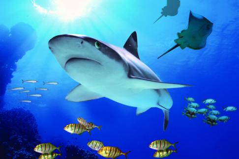 Weymouth Sealife Centre shark promo image