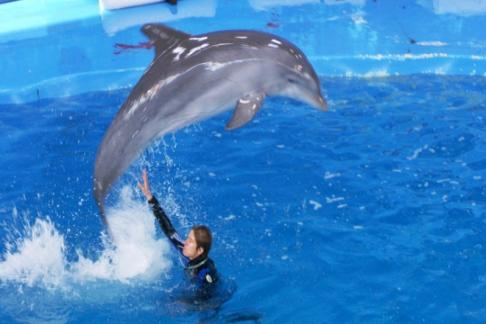 Barcelona Zoo dolphin show