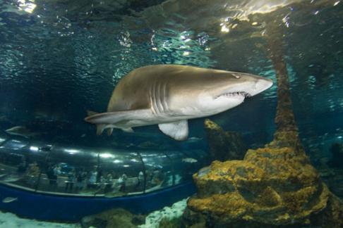 Barcelona Aquarium Laquarium