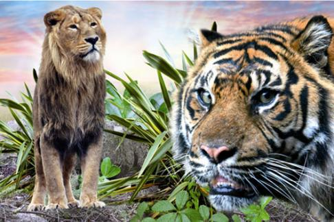 Chessington World of Adventures Zoo and Theme Park Lion and Tiger