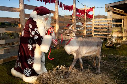 Santa feeding his reindeers at the Eden Project in Cornwall