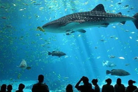 Combo tickets deals for aquarium de paris 365tickets uk for Aquarium de paris jardin du trocadero