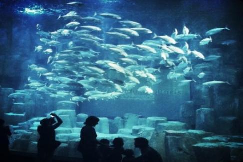 aquarium live in paris 2012 bunte. Black Bedroom Furniture Sets. Home Design Ideas