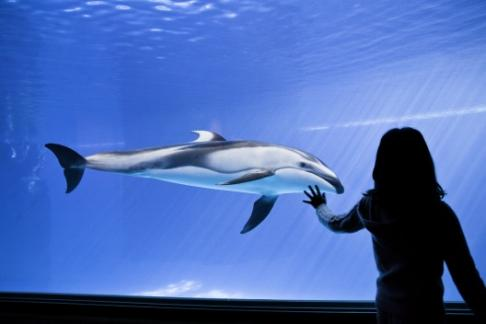 Click to view details and reviews for Shedd Aquarium Spirit Of Chicago Lunch Cruise.